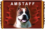 AMSTAFF'S PARTY WELCOME