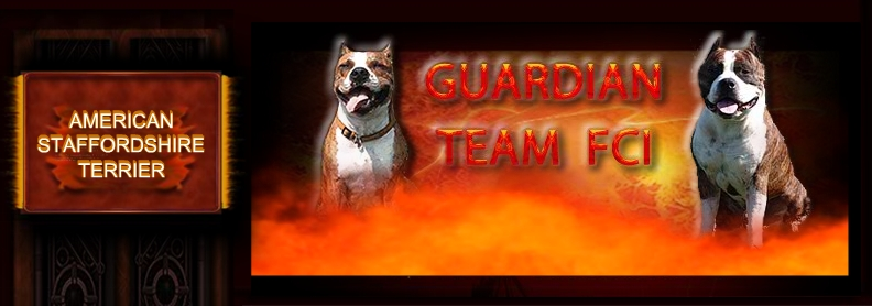 GUARDIAN TEAM FCI - AMERICAN STAFFORDSHIRE TERRIER