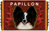 WELCOME TO THE PAPILLON'S WEBSITE